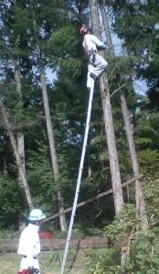 一本梯子で登りワイヤーかけ
