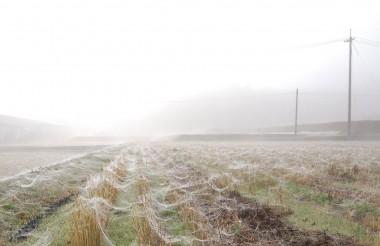 霧で濡れたクモの巣(糸)、何時もそこに在るけどその時々の状態で見えたり気付かなかったり、自分の周りもこんな事がゴロゴロしているかな