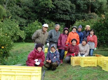 自然農法の畑で八朔狩り