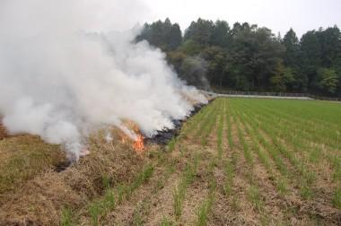 自然農法の田んぼでアゼ草焼き