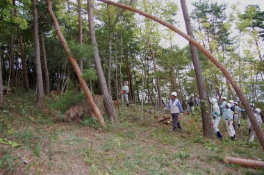 自然林での伐木実習