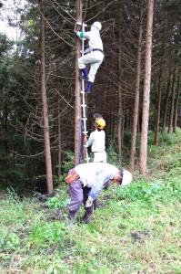 植林した桧に一本梯子で登り枝打ち