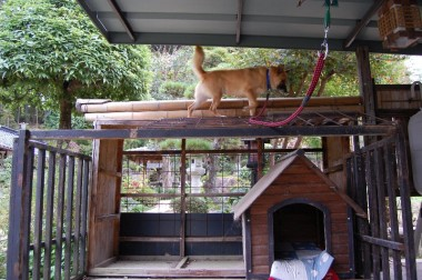高いところに上がるネコ犬