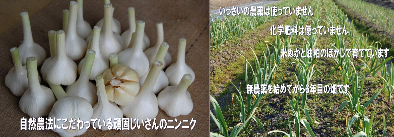 自然農法のこだわりニンニク