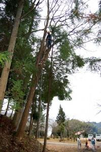 空中での伐採