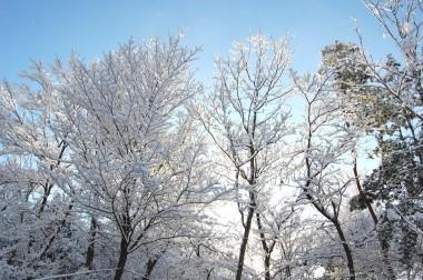 朝ごはんも早々に裏山へ上がってみると枝が朝日に照らされていた