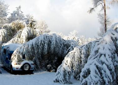 竹が雪の重みで曲がりキャンピングカーにばっさり