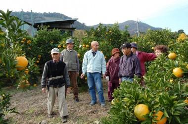 自然農法一筋の河野さんの案内でミカン畑を廻る