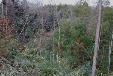 竹を伐って谷の向うまでスッキリ見える