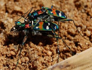 ど派手な色の虫、カメラはまるで無視された