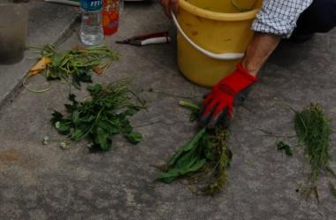 畑周辺の草を使って液肥作り
