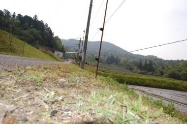 しょっちゅう草刈りしないと草が伸びて電線に当り漏電してしまう