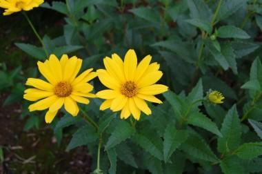 良く見かけた花