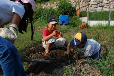 ジャガイモ掘り三兄弟、今年は掘るのが遅くなった