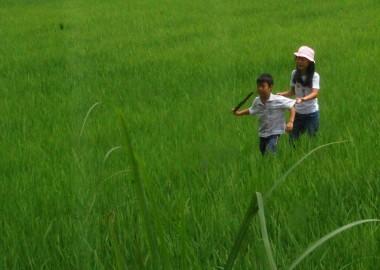 田んぼのアゼで遊ぶ兄弟を台所から写す
