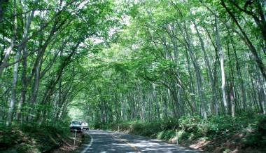 蒜山高原から少し走って大山環状道路へ