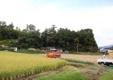 家の前の田んぼで稲刈、ここの米(特別栽培米)は全てJAに出荷します
