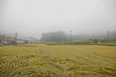今朝は起きる時寒かった、台所から見た霧の朝