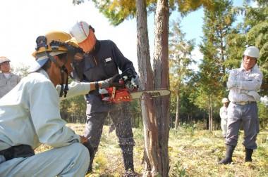 こうやって伐採の基本を習うと大径木でも同じ事です