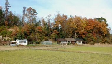 裏山もすっかり紅葉