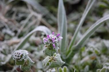草花とニンニク