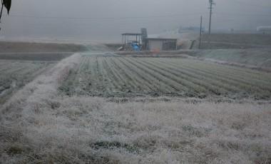 起きたら霜で真っ白!