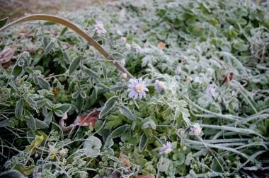 花もすっかり白く