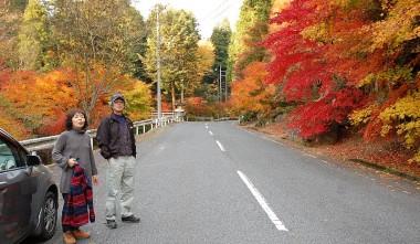 松さんが世話をしている寒曳山麓にある紅葉並木