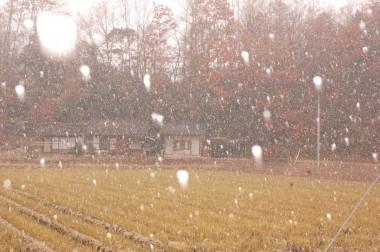 昼から初雪が舞い始めました