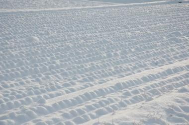田んぼの稲株に積もった雪