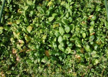 草の中の野菜