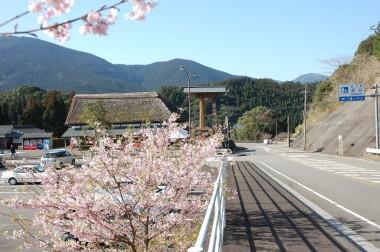 九州の南では桜が