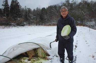 白菜も雪の下です  私の頭が白くなっているけど雪が降ったかな?