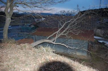 倒木が屋根を覆っていた