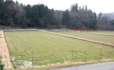 自然農法を続けるほど草が多く生える