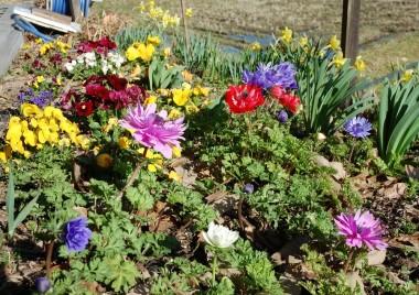 風呂場の横の花、もう少しするとほとんど一面の草だらけになる