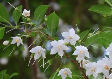 好きな花の一つです、