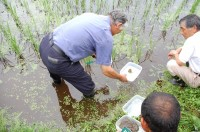 水生生物の調査