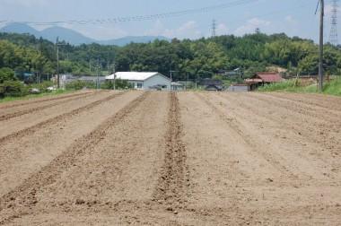収穫後は整地と除草を兼ねてトラクターで耕す