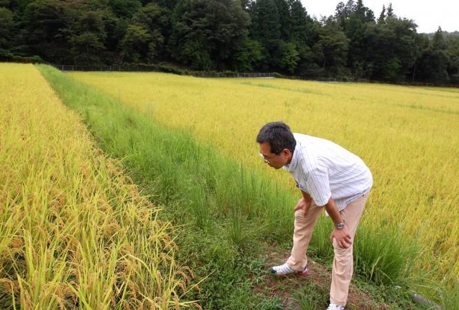 「今年も旨そうな米が届きそうじゃ」と言ったかどうかは分からんです