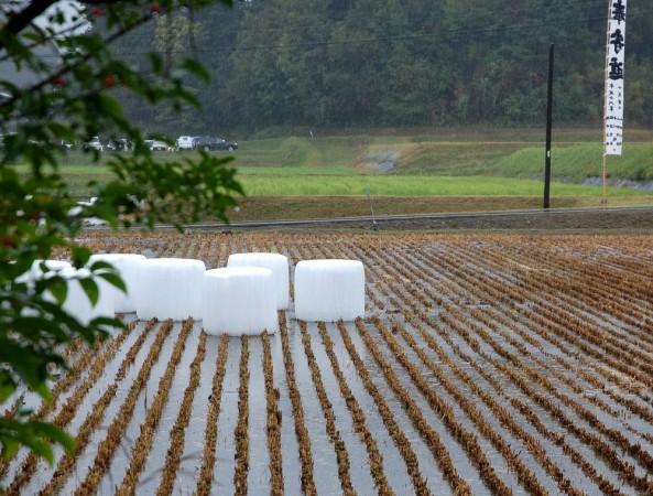 畑に行く気力なく部屋から見た田んぼには土が見えないほど水が溜まっている