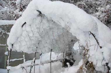 ハウスは雪の屋根