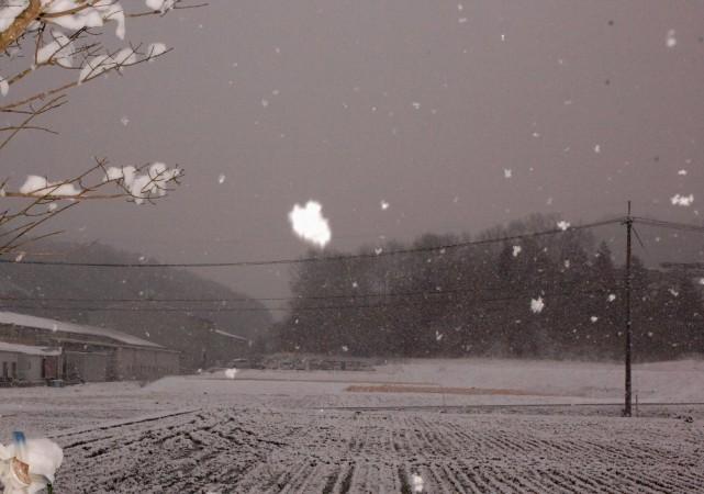 朝の天候は雪、山に行く気分になれない  雪は形も大きさもみんな異なるみたい