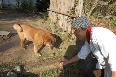 聞き分けのいい犬がボールで遊んでくれる