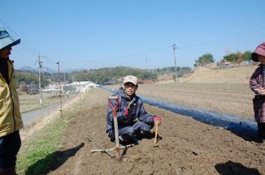 栽培地の耕土の深さや状態を掘って調べる