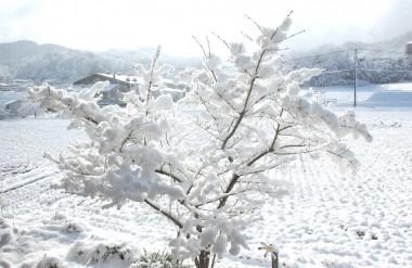 窓先のマユミにも雪