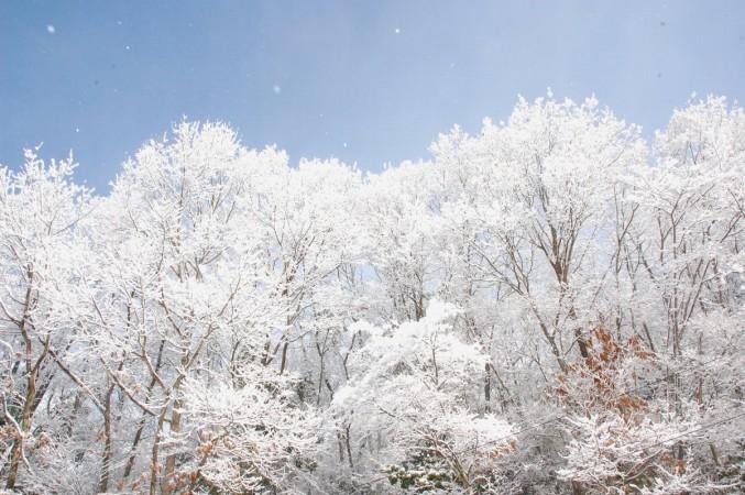起きてみたら晴れた雪の朝、食べず飲まずで写して回る