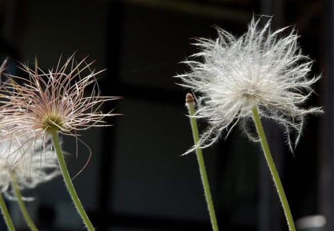 5月13日 種子が出来る