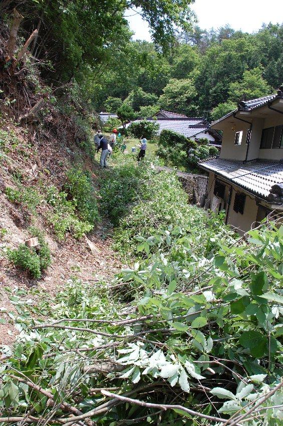 伐採した樹木を粉砕する