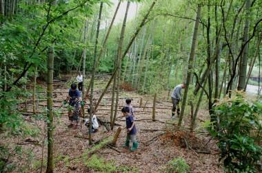筏材料の竹を伐る